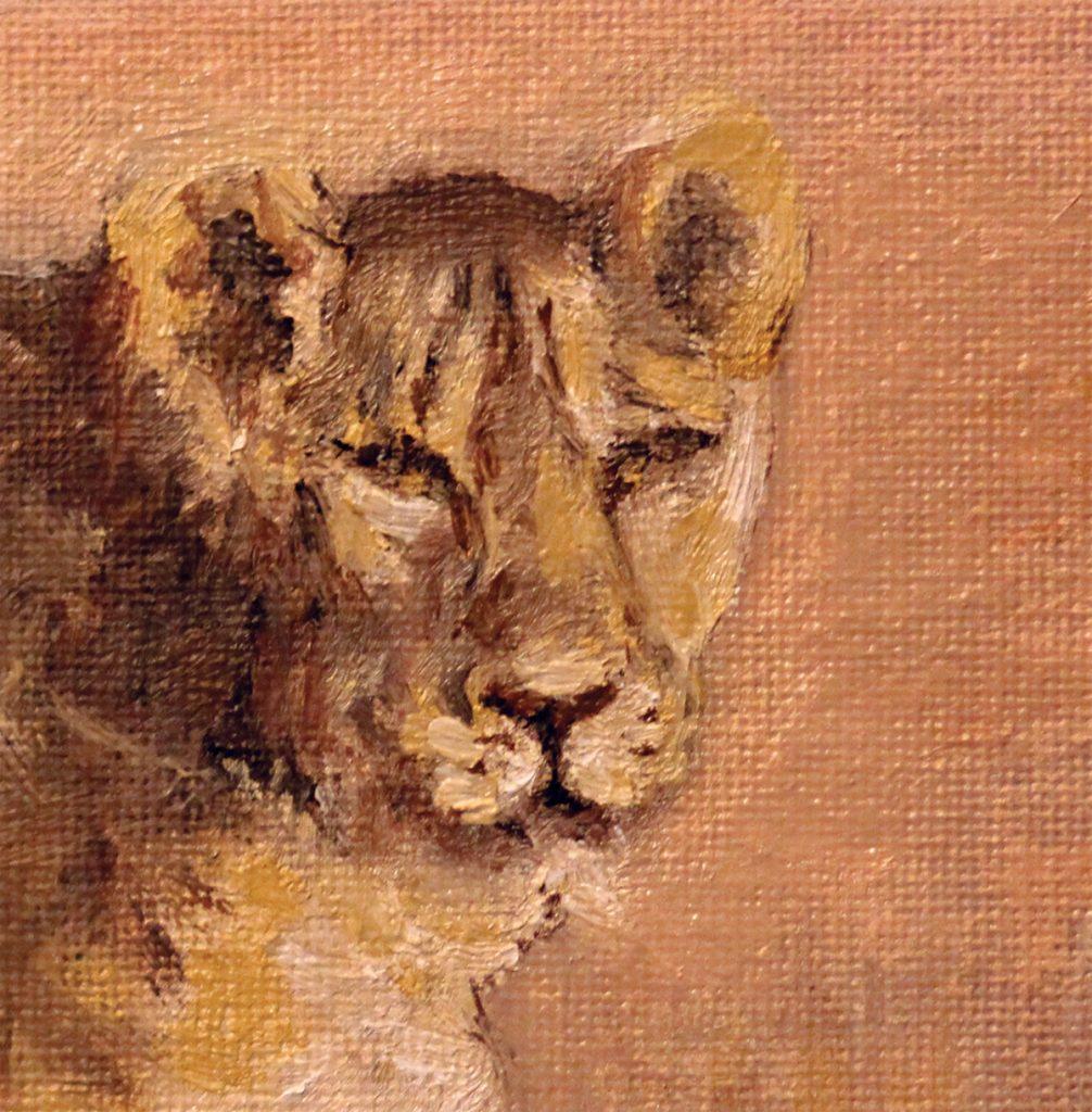 Lions session Lioness